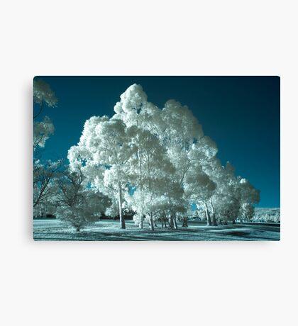 'Bluegum' infrared gum trees Canvas Print