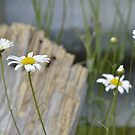 wood and flowers by telley20