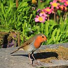 Robin in garden with flowers by turniptowers