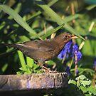 Female blackbird with flowers by turniptowers