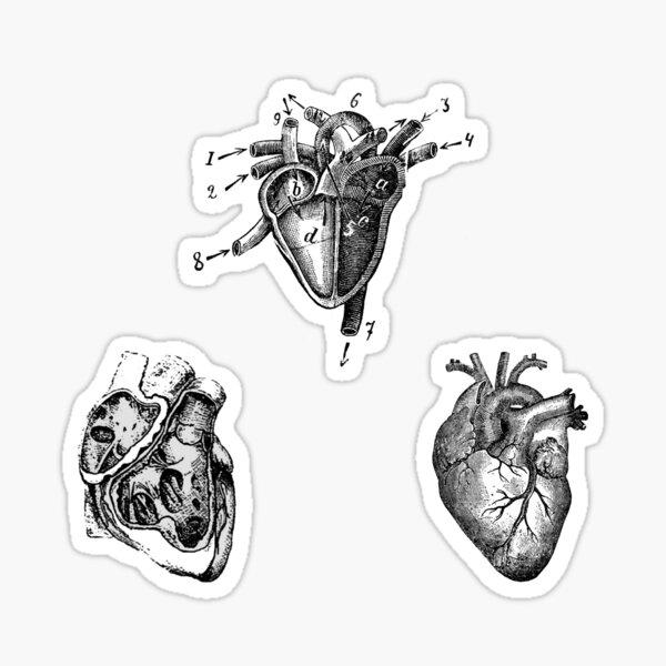 Vintage Heart Anatomy Sticker