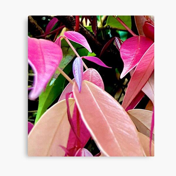 Autumn/Fall Colours III Canvas Print