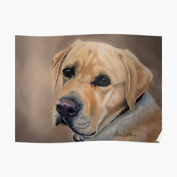 Labrador Expression Poster