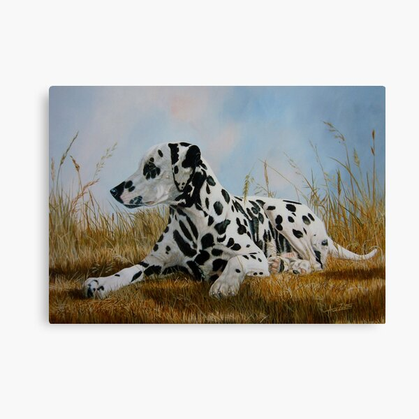 A Pleasant Spot (beautiful black spotted Dalmatian) Canvas Print