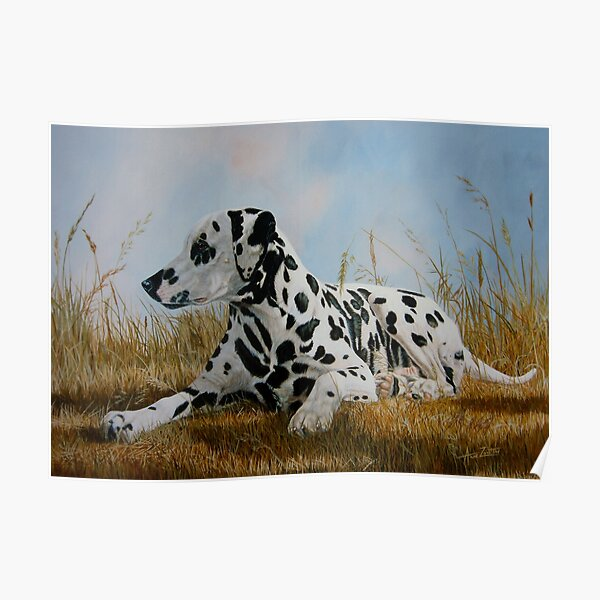A Pleasant Spot (beautiful black spotted Dalmatian) Poster