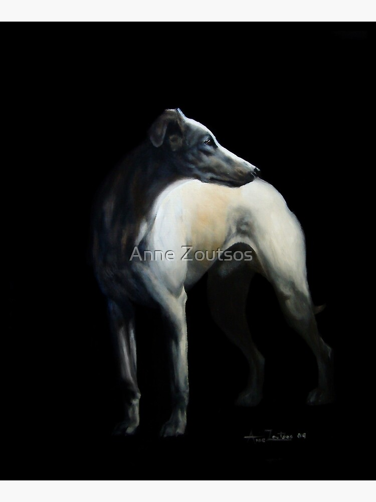 Whippet In Black by AnneZ