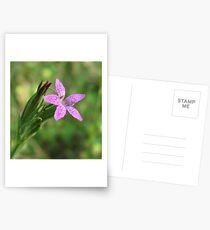 Hübsche rosa Blume - Dianthus Armeria Postkarten