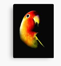 angry bird Canvas Print