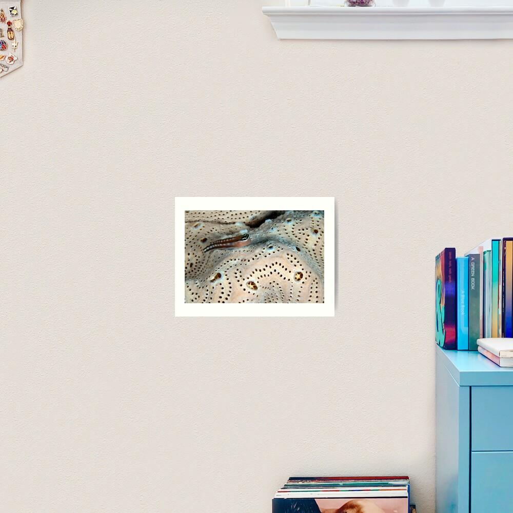 Home on a doily Art Print