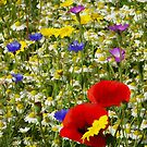 Summer wild-flowers by David Tovey