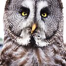 Marley the Great Grey Owl by Natalie Broome