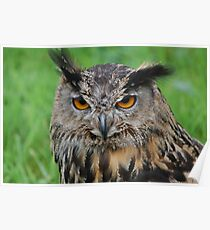 european eagle owl Poster