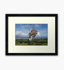 The Red-tailed Hawk over Dungarvin Bay  Framed Print