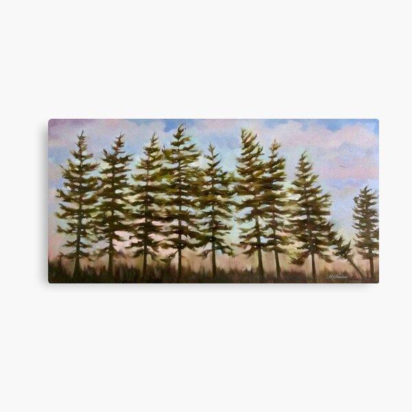 Algonquin Trees Canvas Print