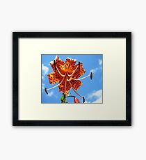 Turk's Cap Lily Framed Print