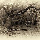 Solitary Oak by Joe Saladino