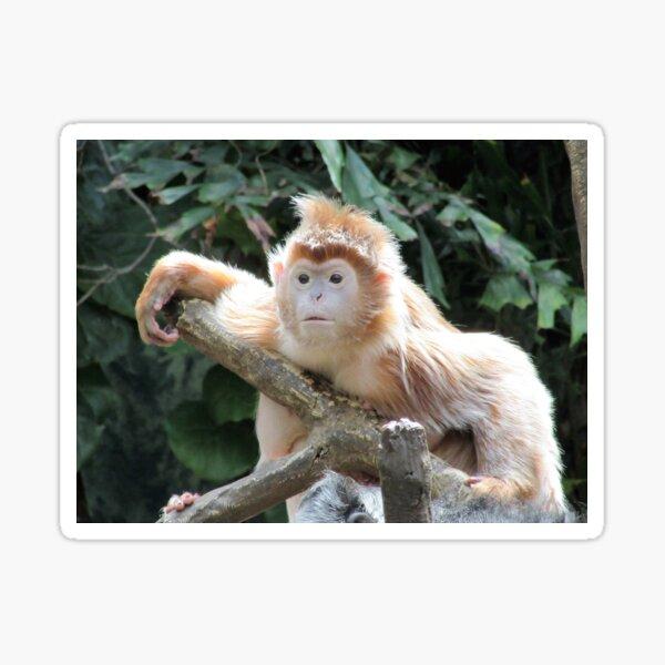 Monkey - Zoo Sticker