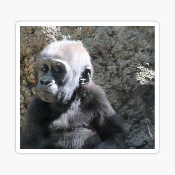 Baby Gorilla Sticker