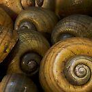 Apple Snails by Joe Saladino