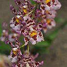 Orchid by gabriellaksz
