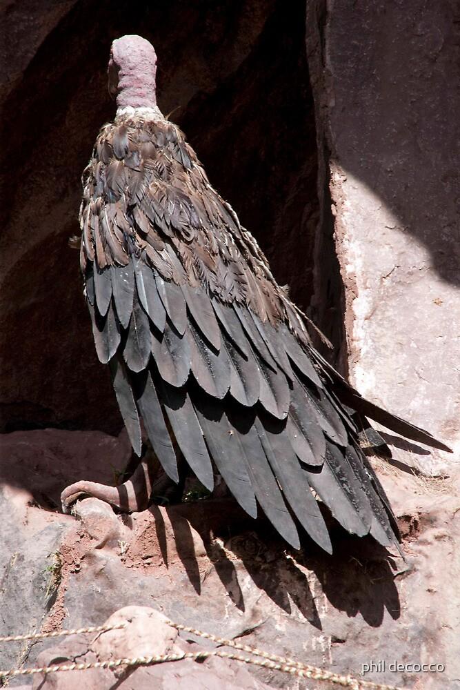 Condor by phil decocco