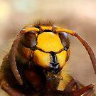 Hornet by Joe Saladino