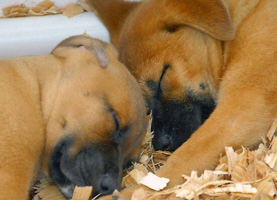 Sleeping Puppy's by David Lee Thompson
