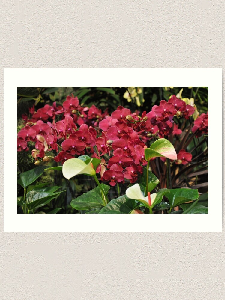 Alternate view of Red Orchid Art Print
