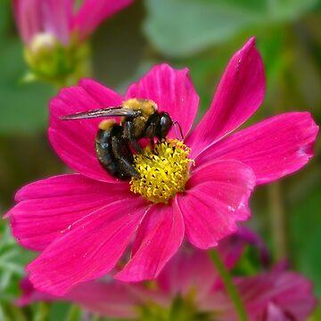 Bees Knees by JbyrdYoga