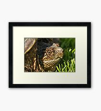 Big Snapping Turtle Framed Print