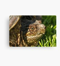 Big Snapping Turtle Canvas Print