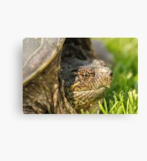 Big Snapping Turtle 2 Canvas Print