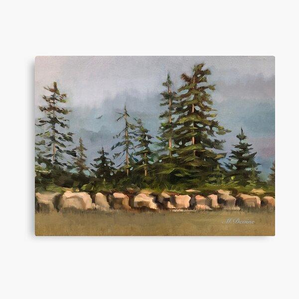 Northern Sky Canvas Print