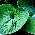 Hosta Heart by Valerie  Fuqua
