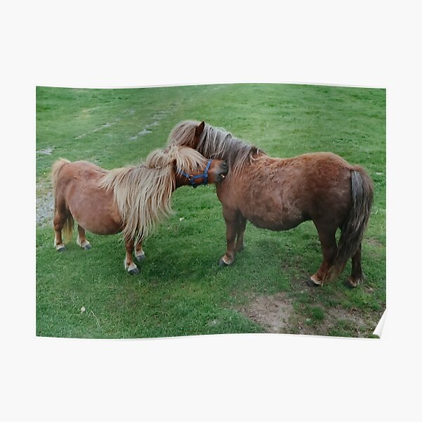Friends - Shetland Ponies Poster