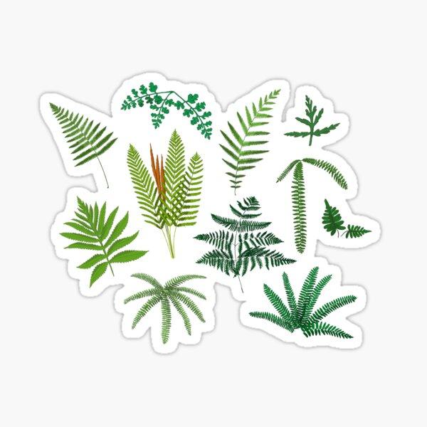 Fresh Adirondack Ferns Sticker