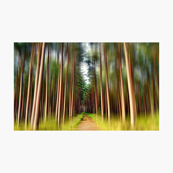 Path Through the Pines. Photographic Print
