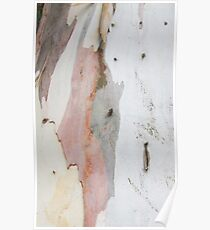 TREE, BARK, TEXTURE, color, Eco, Ecology, Nature, Natural World Poster