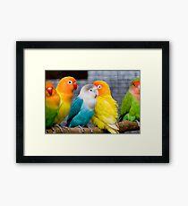 Love Parrots Birds  Framed Print