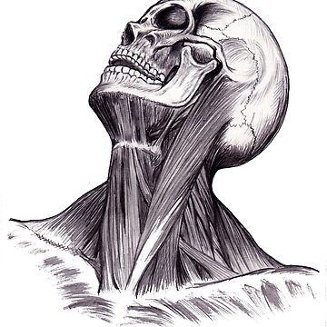 Human Anatomy  by Robykat