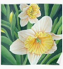 Spring Daffodils Painting Poster