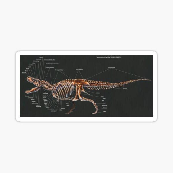 2016 Tyrannosaurus Rex Skeletal Study Sticker