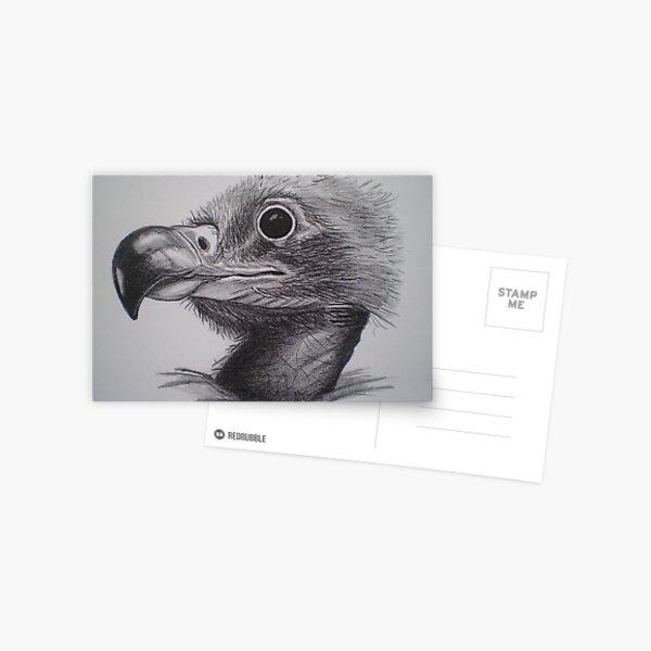 Baby Eagle Postcard