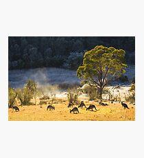 Australian Winter Photographic Print