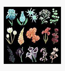 Bloom Photographic Print