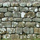 Hadrian's Wall Close-up by Richard Winskill
