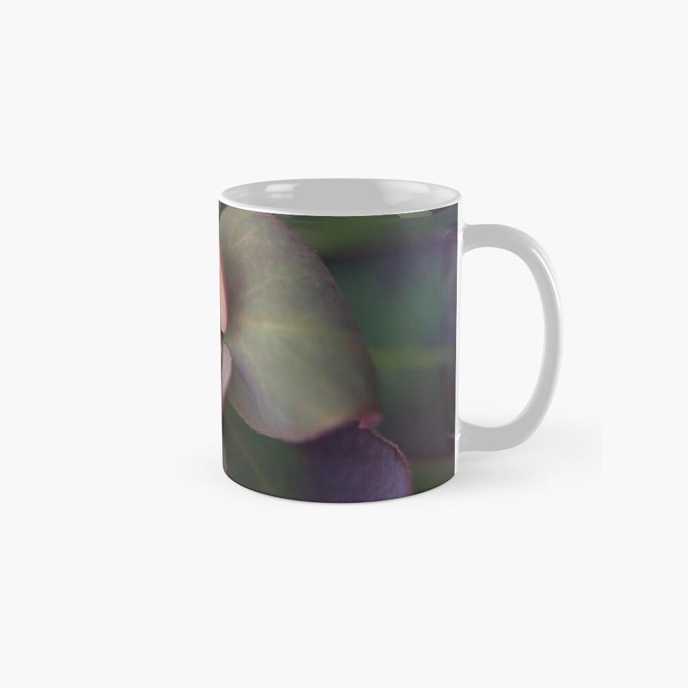 Euphorbia Blackbird Tassen