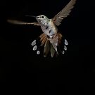 Broad -tailed hummingbird displaying  by ruth  jolly