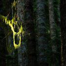 Hanging - Boulder River Wilderness, Washington by Jason Heritage