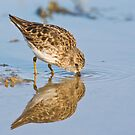 Lil Sandpiper by Ruth  Jolly